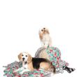 70834 - Pet Blanket Novelty Dog Print