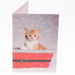 49862 - RSPCA Christmas Cards