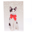 51253 - RSPCA Christmas Cards