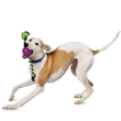 16332 - Busy Buddy Dog Toy, Roly Rope